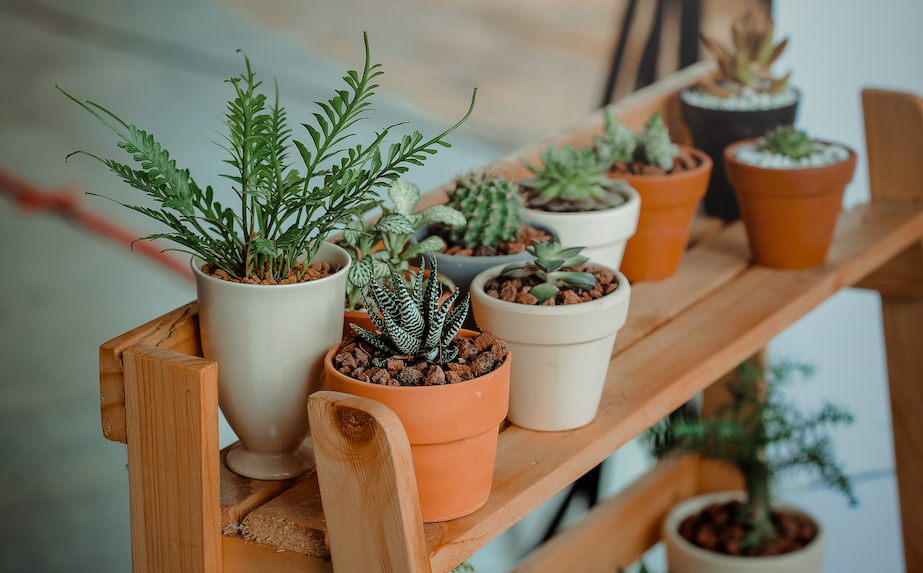 Succulents, and other green foliage potted in clay pots on a wood shelf outside a new home on a lanai built by Avex Homes.