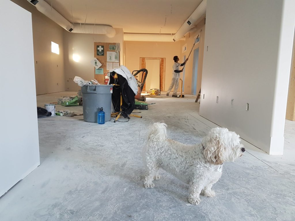 White puppy watching over remodeling being completed at his already purchased home by Avex Homes in Central Florida.